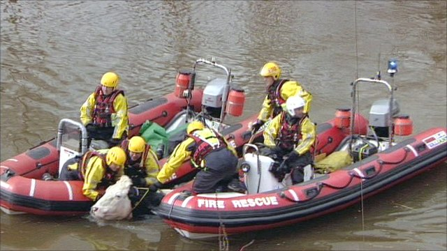 Cow being rescued from the River Severn in Sandhurst, Gloucester