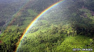 Rainforest and rainbow