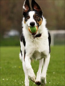 Megan, one of the puppies, plays with a ball at the reunion