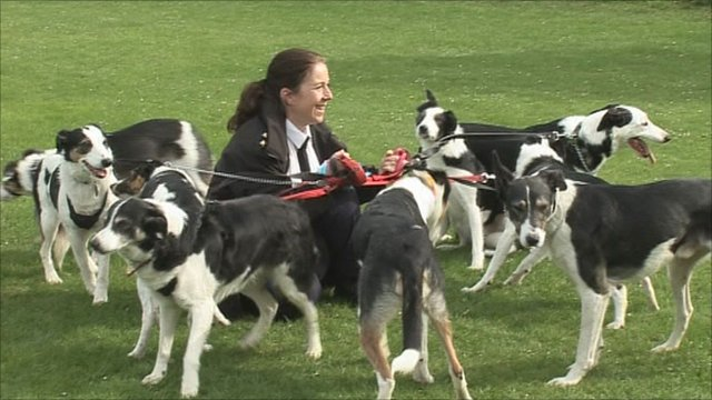 Reunion for seven left-to-die puppies