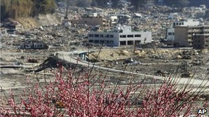 Blossom on a hill over-looking the destroyed city of Rikuzentakata