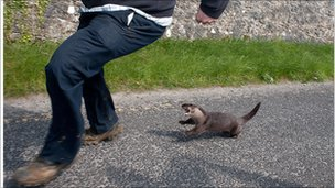 Otter attacks