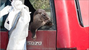 Otter jeep