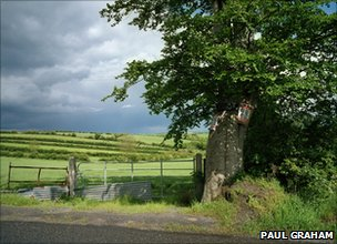 Unionist Posters on Tree, County Tyrone, 1985, from the series Troubled Land, Pigment ink print