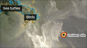Map showing environmental impact of BP Gulf oil spill (Image: BBC)