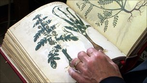 A copy of one of the ancient manuscripts containing descriptions of the plants contained in the pills
