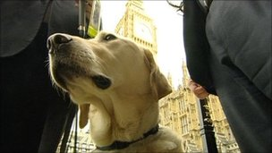 Chipp the dog in Westminster