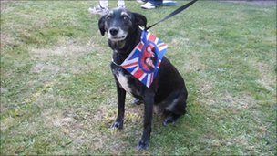 Dog with a Royal Wedding flag