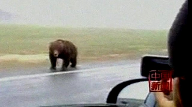 Bear in China