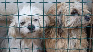 Dogs at the China Small Animal  Protection Association&#039;s base
