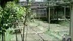 Bin Laden's garden
