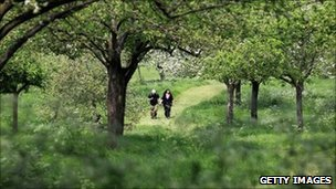Orchard in England