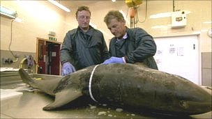 Andrew Brownlow (l) and Paul Rose carrying out the autopsy
