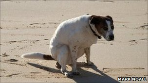 dog fouling on the beach (pic: Mark Noall)
