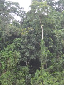 Liberian rainforest