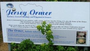 Jersey Ormer