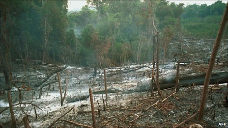 Rainforest slash and burn agriculture AFP/Getty