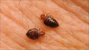 Bedbugs (photo: National Pest Management Association)