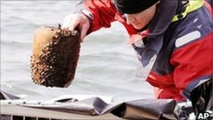 Urns containing human ashes discovered in Lake Zurich
