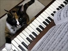 'Minnou' the cat playing the piano