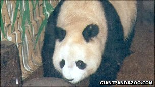 World&#039;s oldest panda Ming Ming
