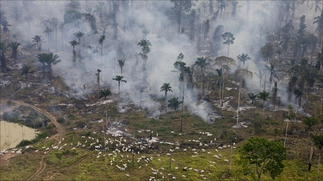 Man-made fires to clear land for cattle in Para state, Brazil (Photo courtesy of Greenpeace)