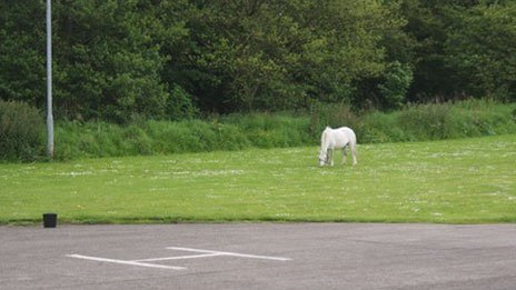 A horse grazing next to the helipad at Wrexham's Maelor Hospital