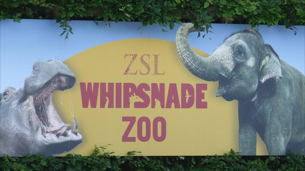 bbc news   in pictures whipsnade zoo celebrates 80th birthday
