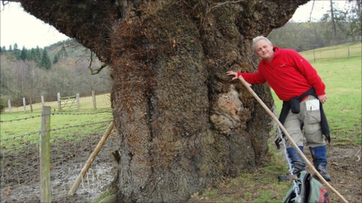 Rob McBride with a giant oak at Kingswood, Welshpool