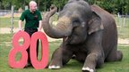 Whipsnade Zoo celebrates its 80th birthday, with a little help from Kaylee the elephant