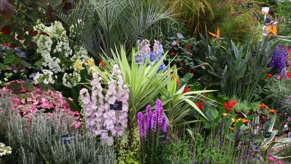 BBC News - In pictures: Cornwall at Chelsea Flower Show 2011