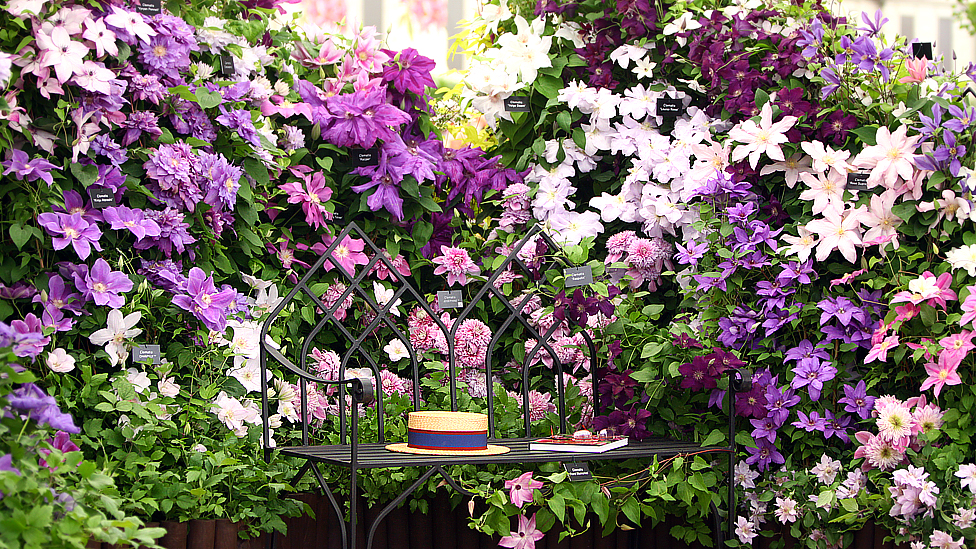 Bbc News In Pictures Norfolk 39 S Chelsea Flower Show Winners