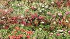 Potash Nursery at RHS Chelsea Flower Show 2011