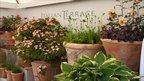 Italian Terrace at RHS Chelsea Flower Show 2011