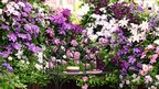 Flowers displayed at Chelsea Flower Show