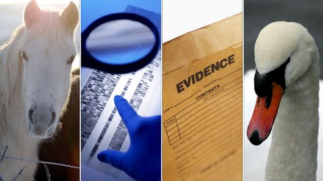 Stock images of animals and forensic evidence