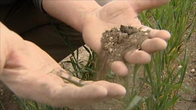 Farmer handling dry soil