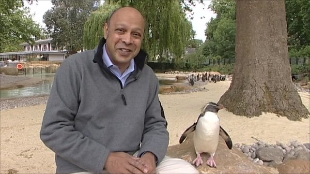 Penguin and reporter