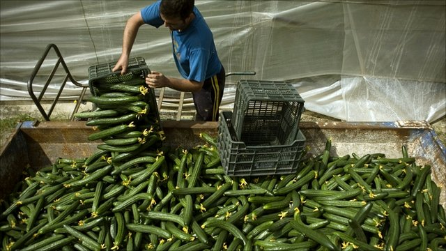 A farmer throws away cucumbers outside a greenhouse near Malaga