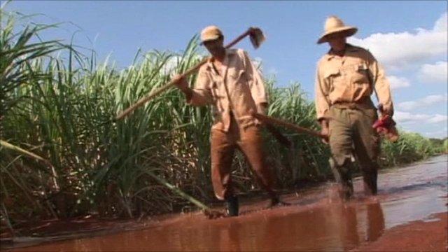 Sugar cane farmers