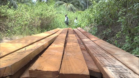 Planks of wood at a lumberjack site in DR Congo