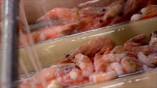 Shrimp shell is used in some hair products