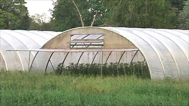 Bean sprout farm, Uelzen