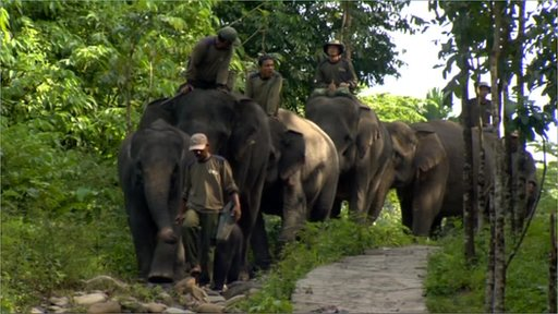 Elephants patrolling in Tangkahan, Sumatra.