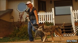 Woman preparing to evacuate with dogs