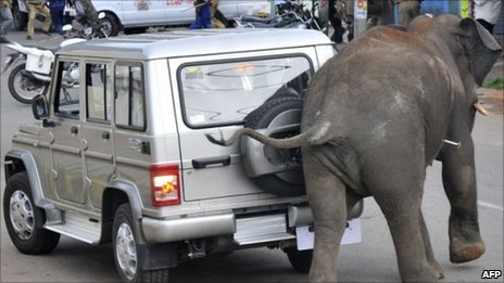 Rampaging elephant in Mysore
