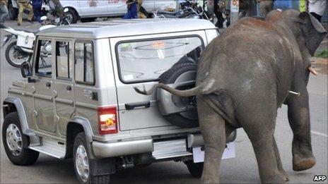 Rampaging elephant in Mysore