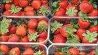 Strawberry punnetts