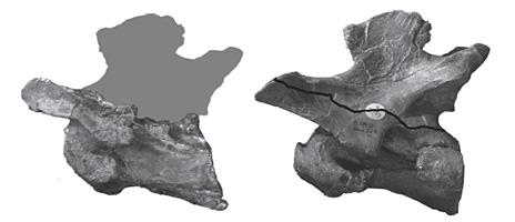 Bones comparison