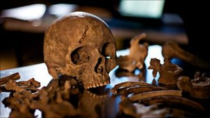 Skeleton at Pompei prepared for study